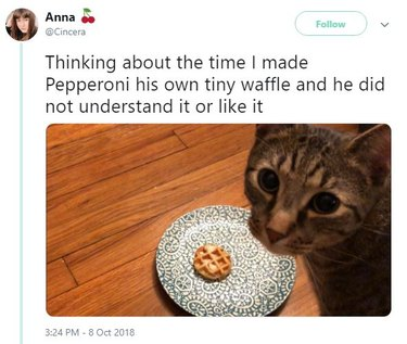 Cat with tiny waffle.