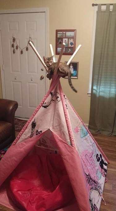 Cat sitting in the crossed poles of a pet-sized tepee.