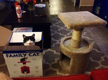 Cat sitting in box next to cat tree.