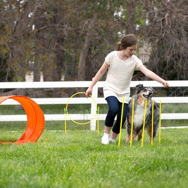 dogs runs between agility poles