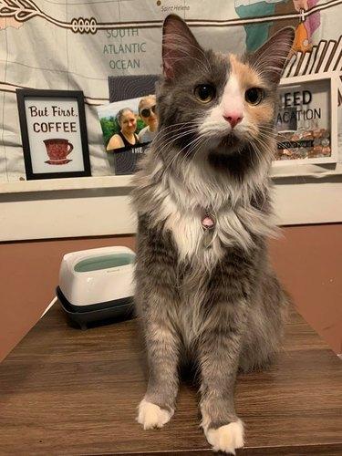 cat named Fishtix