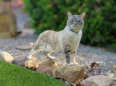 cat stands on rocks