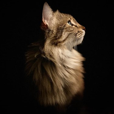 pretty kitty photographed from side
