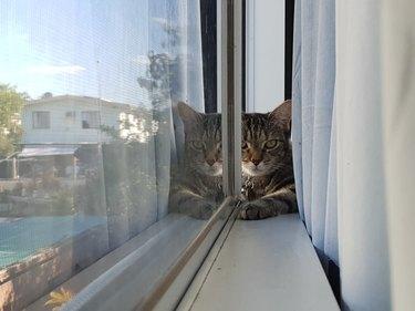 cat sits in window sill