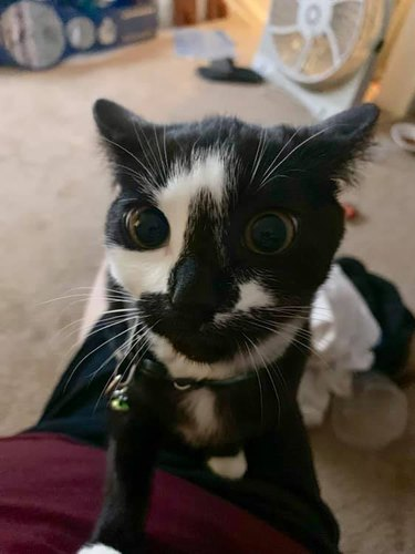 cat with face like rorschach test