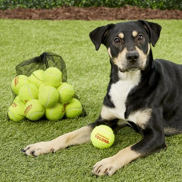 pressureless tennis balls for dogs