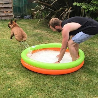 Dog bouncing out of a kiddie pool.