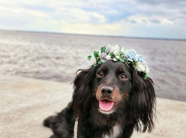 dog at the beach with a flower crown