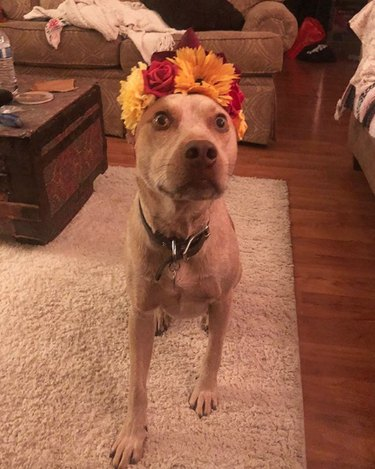 dog in yellow red and orange flower crown