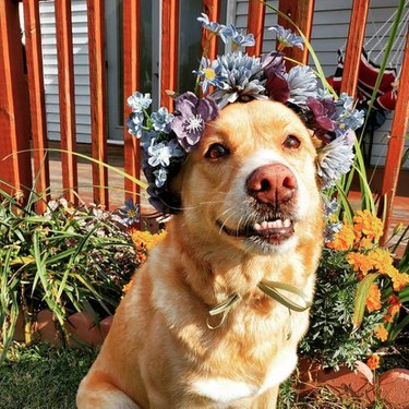 smiling dog with wildflower crown