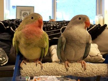 birds at work