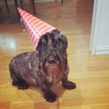 20 Dogs — And 1 Cat — Rocking Sweet Party Hats