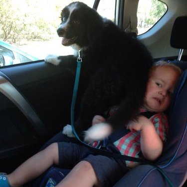 Puppy sitting on child in car seat.