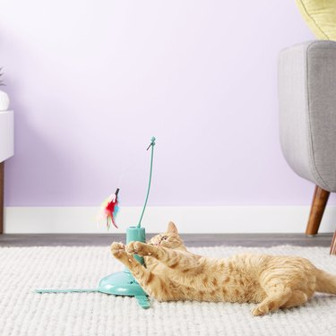 cat plays with SmartyKat Loco Motion Interactive Cat Toy