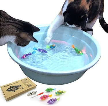 Cats play with swimming robot fish toy