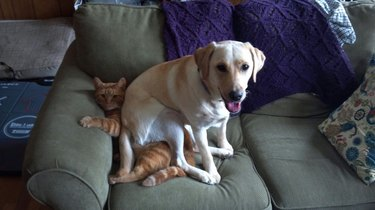 Dog sitting on a cat on a couch.