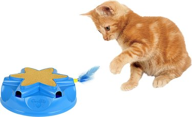 cat plays with Catty Whack Electronic Motion Cat Toy