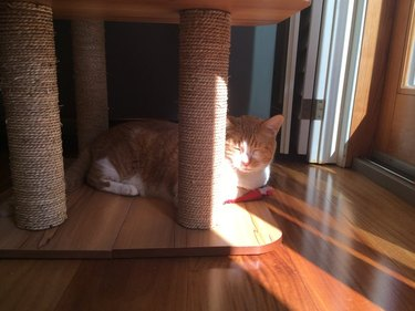 cat sitting in sunbeam