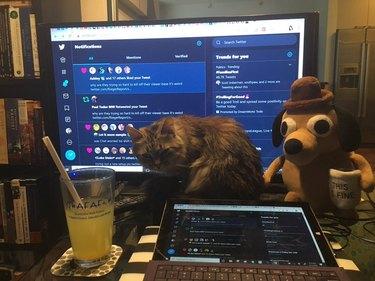 cat blocks computer monitor