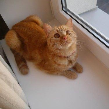 orange cat sits in window