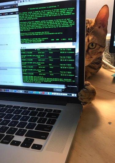 cat peeks around computer