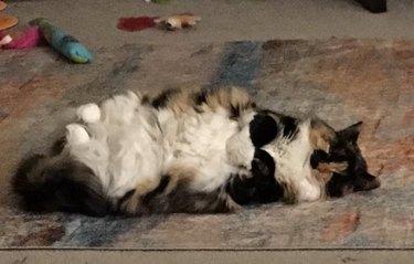 cat rolling on floor