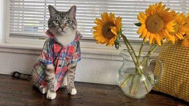cat wearing plaid shirt