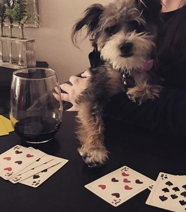 a dog playing cards and drinking wine