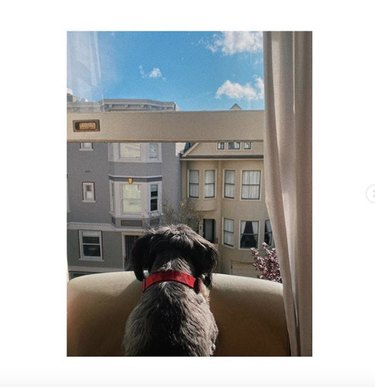 a dog looking out the window