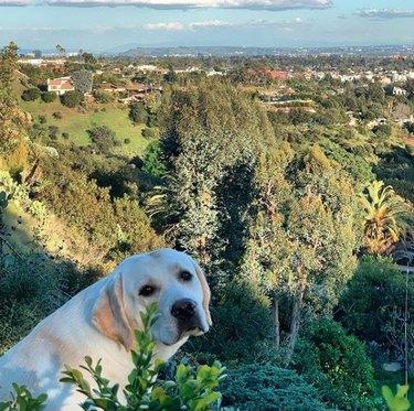 a dog on a hike