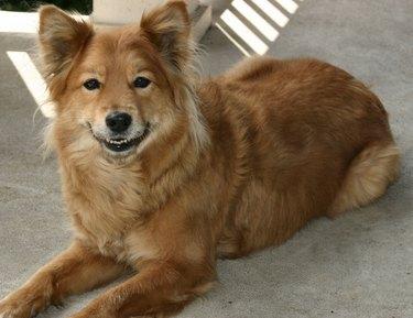 cute dog grinning