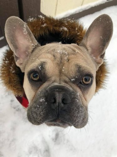 50 Faces Dog Owners Can't Say No To