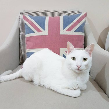 200 British names for cats