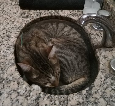 Cat curled into a ball in a sink.