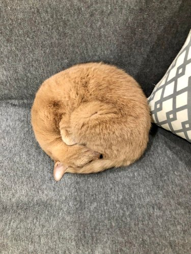 Cat curled into a ball.