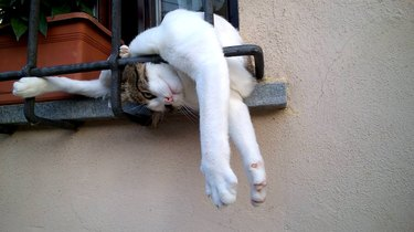 Cat stuck on a windowsill