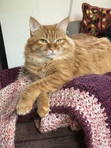 orange cat crossing paws