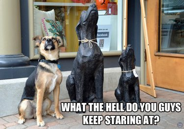 Dog looking up next to two statues of dogs looking up