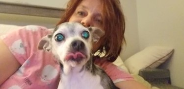 24 hilariously unflattering pictures of dogs