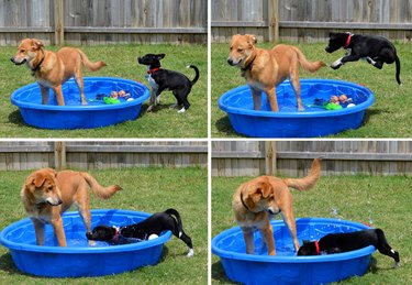 Dog attempting to leap into kiddie pool