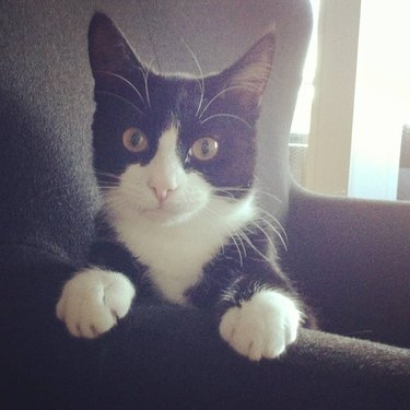 230 names for spunky cats