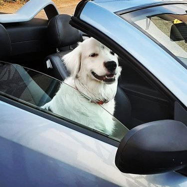 dog sitting in the front seat of a convertible