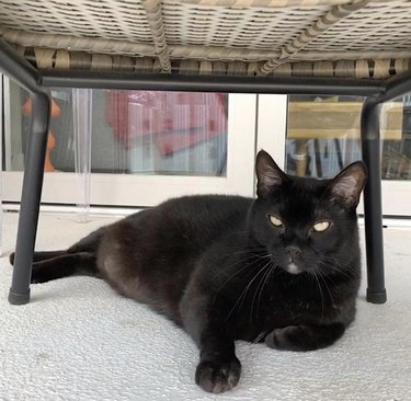 black cat chilling under chair
