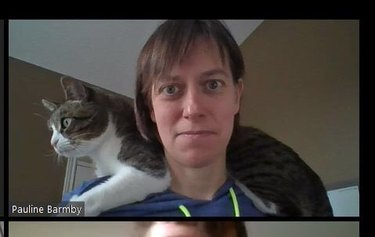 cat sits on doctor's shoulder during zoom chat