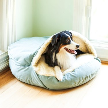 dog lying in cozy cave bed