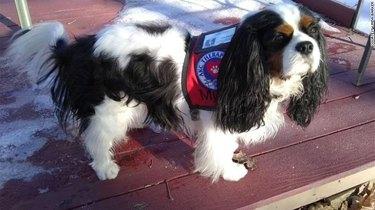 murfee the mayor dog