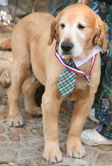 Mayor Max the dog wearing a tie and a medal