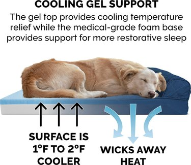 dog lying on cooling bed