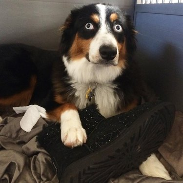 21 dogs doin' themselves a guilty