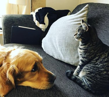 Sad dog makes puppy eyes at stoic cat